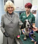 Camilla, Duchess Of Cornwall during a visit to Battersea Dogs and Cats Home