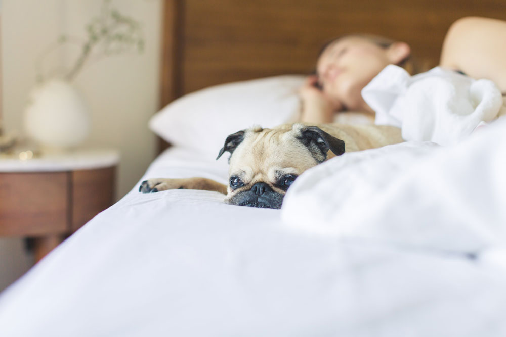 bed-bedroom-blanket-545017