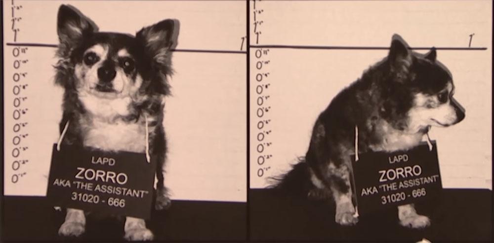 criminaldog
