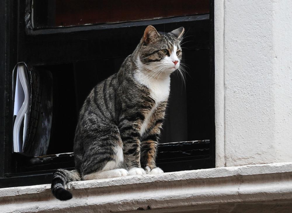 Ecuadorian Embassy Julian Assange Window Lights
