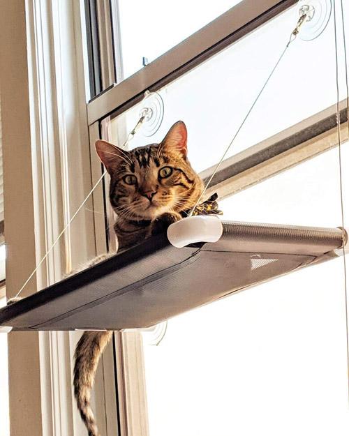 Amazon_KittyCot2