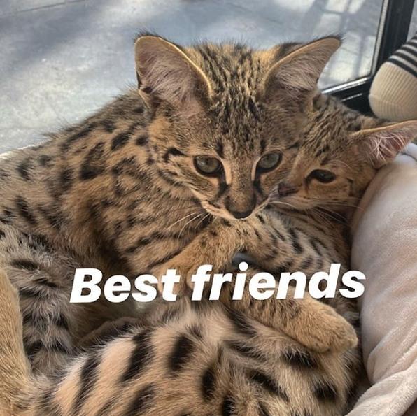 Justin Bieber's sweet cats