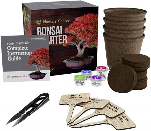 Amazon_BonsaiStarter