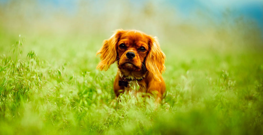 dog-on-grass-257577