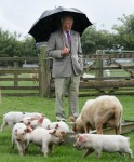 Prince Charles visits Cotswold Farm Park