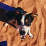 Reese_W-New_Dog_1