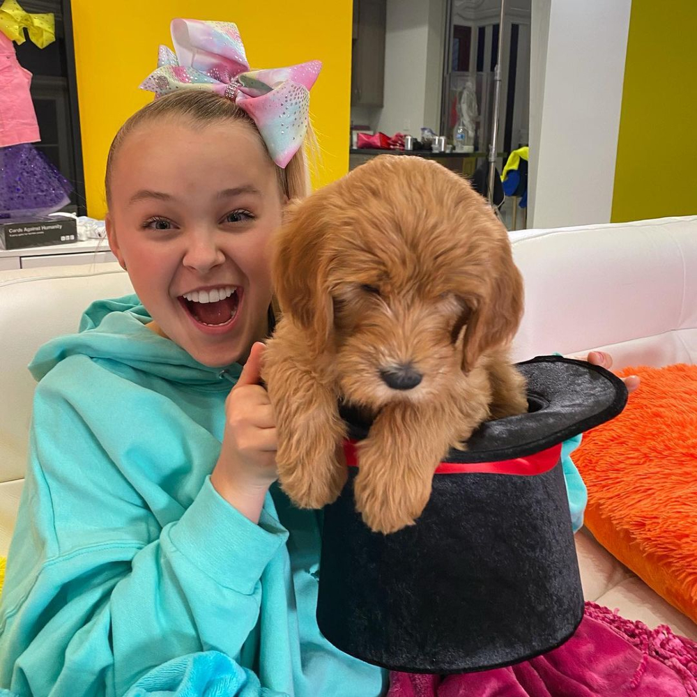 JoJo Siwa came out: 'I've never been so happy'