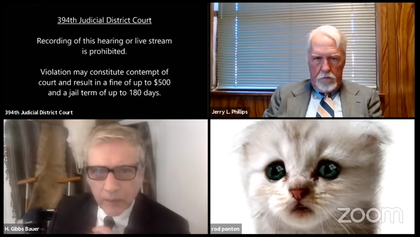 cat lawyer2