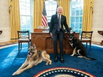 Joe Biden's dogs get taken to Delaware after a 'Biting Incident' at the White House **FILE PHOTOS**
