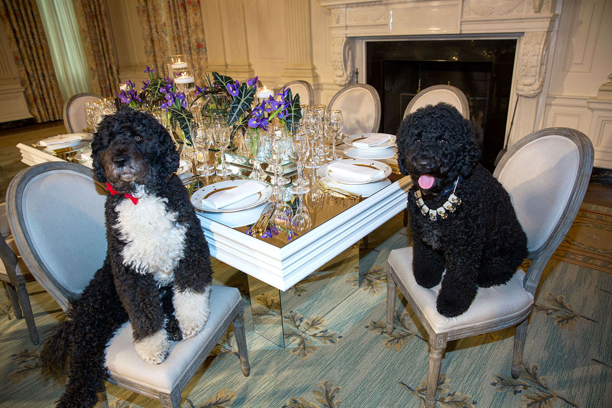 Obama family pets Bo, left, and Sunny, right.