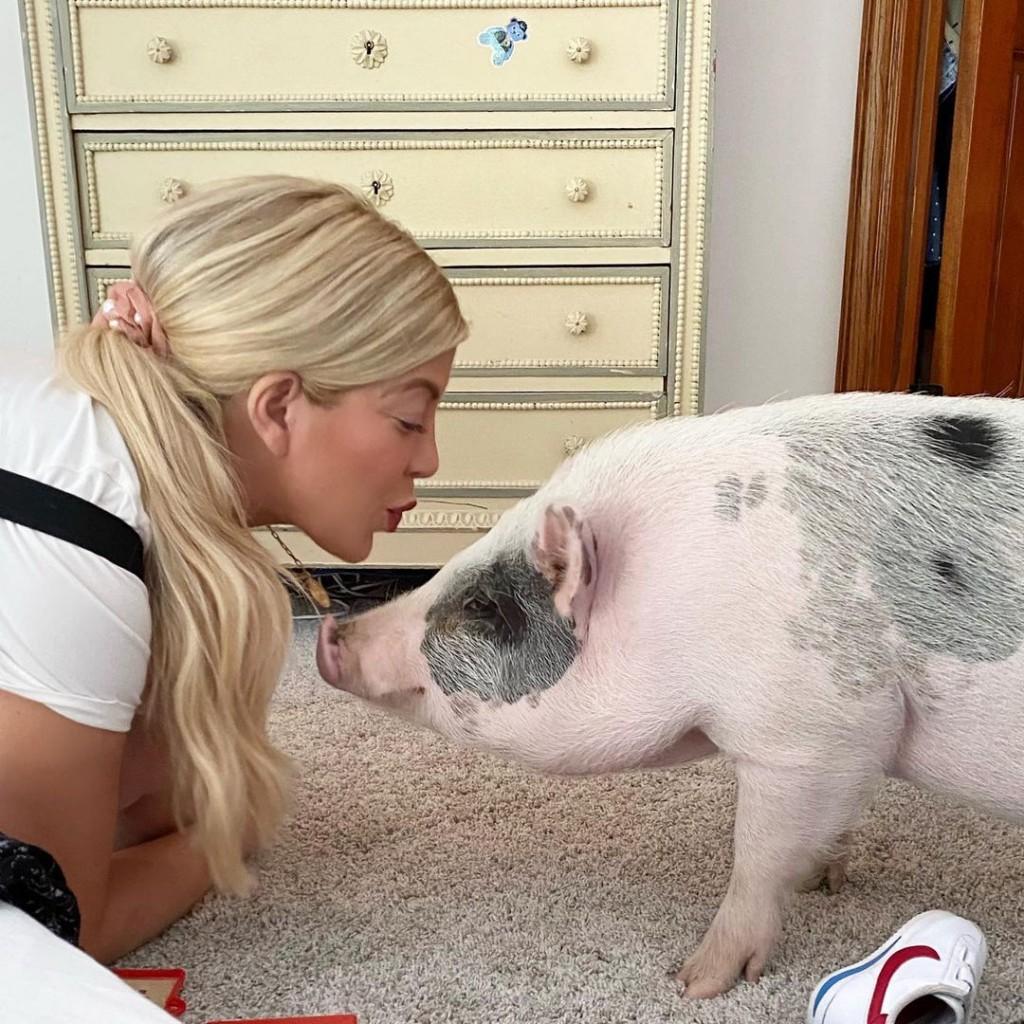 Tori_S-Pig